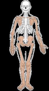 skeleton-308674_640